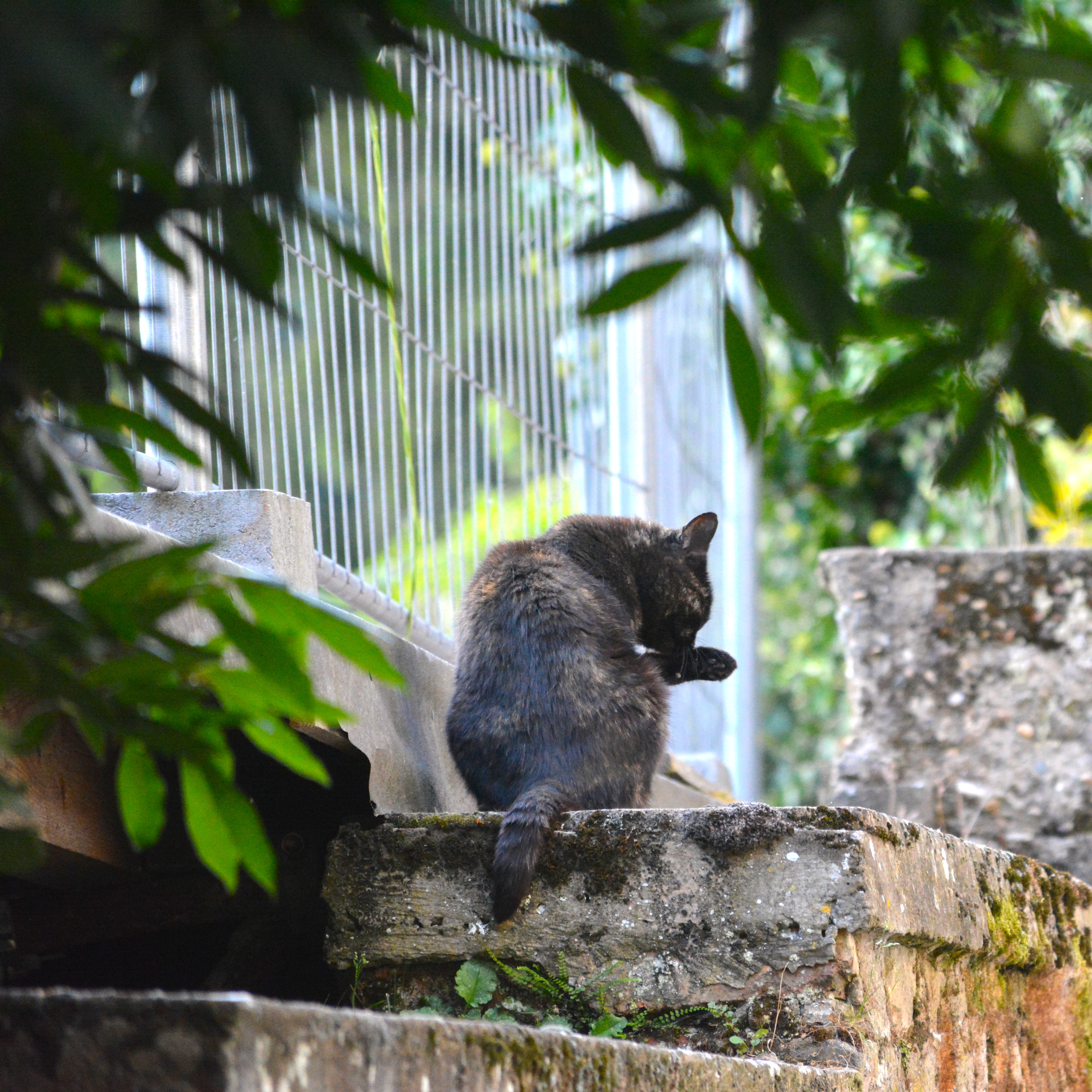 chat noir à neudor