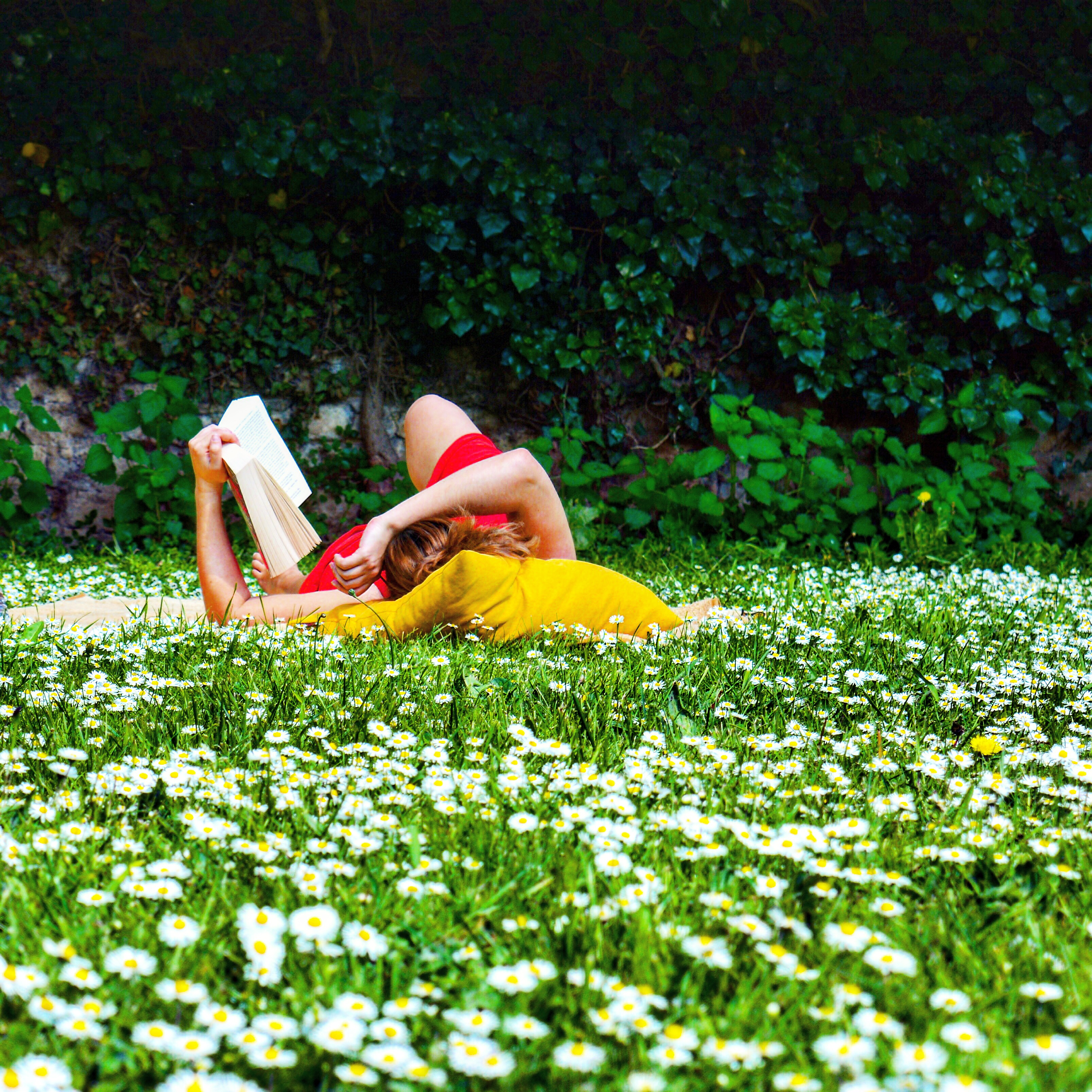 Lecture dans l'herbe